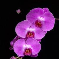 Орхидея с бабочками :: Светлана Л.