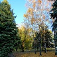 Осенние зарисовки в городе... :: Тамара (st.tamara)