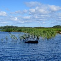 Бухта Финского залива :: Светлана