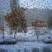 15.11.2015. Выпал снег, к утру растает :: Лариса Коломиец