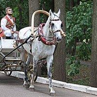 Рыцаря на белом коне заказывали? :: Лара ***