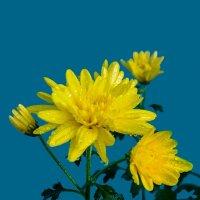 Ноябрьские цветы :: Анатолий Иргл