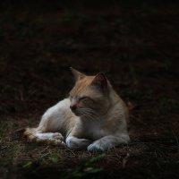 В позе льва. :: Александр Валяев