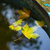 Осень везде... :: Игорь Герман