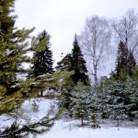 к зиме готовы... :: ВладиМер