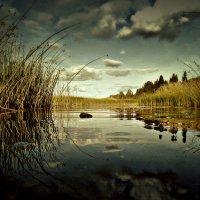 летний Юг... река Юг :: ВладиМер