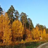 Краски осени :: Лидия (naum.lidiya)
