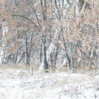 Первый снег :: Vit