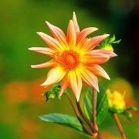 Яркий цветок сентября :: Анатолий Иргл