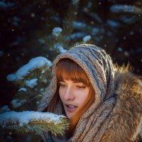 В хвойном лесу :: Владимир Belov