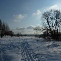 Утренняя лыжня. :: Александр Атаулин