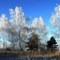 Удивил ноябрь морозной синевой... :: Лесо-Вед (Баранов)