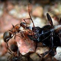Охота на жука 2 :: Асылбек Айманов