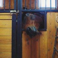 """""""Привет!"""" - сказала лошадь. - """"Поесть чего-нибудь не принесла?"""" :: Zifa Dimitrieva"""