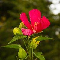 Цветочек :: Андрей Нибылица