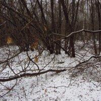 Неужели зима? :: Андрей Лукьянов