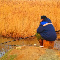 Ловись рыбка ! :: Татьяна ❧