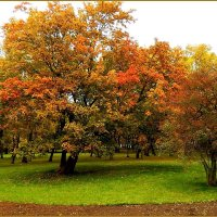 Красавица осень :: Natali