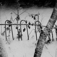 Ноябрь. Снег. :: Валерия  Полещикова