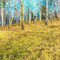 Осенние листья :: Анатолий Иргл