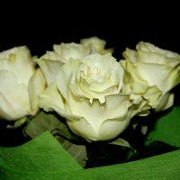 Розы :: Tiana Ros