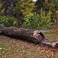 о деревьях :: Александр Корчемный
