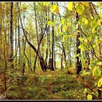 золотая осень :: Ольга (Кошкотень) Медведева