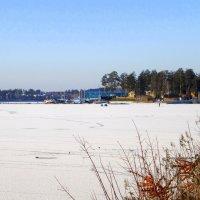 Бердский залив замёрз полностью 10 11 2015г. :: Мила Бовкун