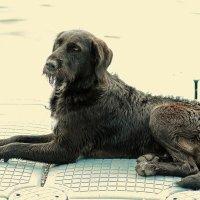 Одинокий пес :: Дмитрий Шатров