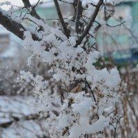 Шаги зимы :: Ксения Слободина