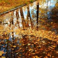 Золотая осень :: Виктория Браун