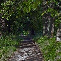 Зелёный тоннель. :: Владимир
