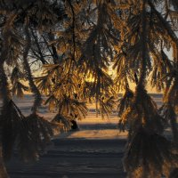 Зимний закат :: Алена Смирнова