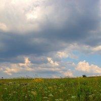 Полевые цветы :: Бронислав Богачевский