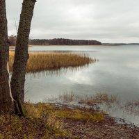 У озера :: Игорь Вишняков
