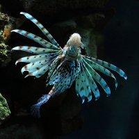 Словно бабочка в пучине :: Alexander
