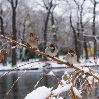 Три товарища)) :: Ната Коротченко
