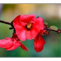 Аленький цветок :: Николай Волков