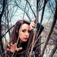 Лес таит в себе много прекрасного :: Дарья