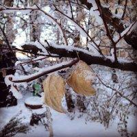 Зима :: Анастасия