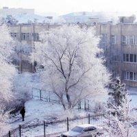 Зима( Вид из окна) :: раиса Орловская