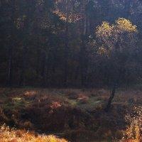 Вспоминая прошедшую осень (2)... :: Лесо-Вед (Баранов)