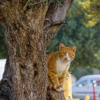 Внимательный кот! :: Александр Деревяшкин