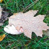 Осенний лист :: Андрей ТOMА©