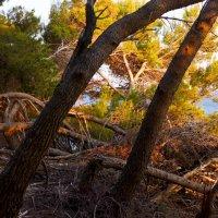 Падающий лес... :: Светлана Игнатьева