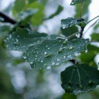 Летний дождливый вечер :: Виктория Браун