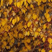 Осень :: Nanaly Gold