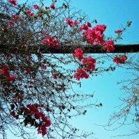 Переплетения цветов :: KIRA Sm.