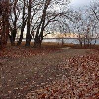 Осень в Волгограде или Если б листья знать могли :: Dr. Olver  ( ОлегЪ )