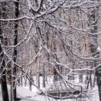 Просто наступила зима :: Елена Семигина